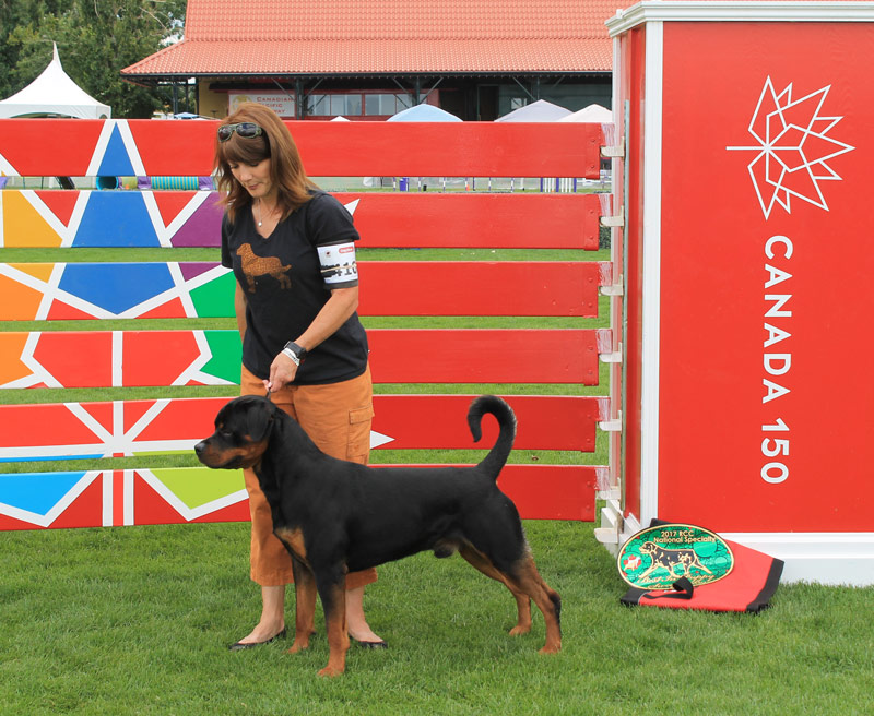 Rottweiler Leto at RCC Specialty Calgary